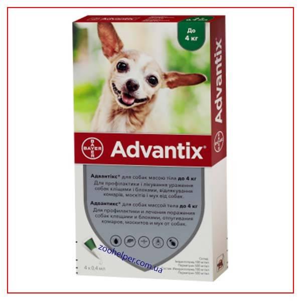 Виды инъекций для собак и нужна ли прививка от блох?