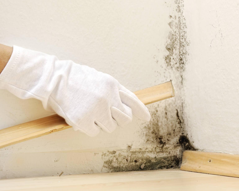 Плесень в доме как избавиться? несколько проверенных советов