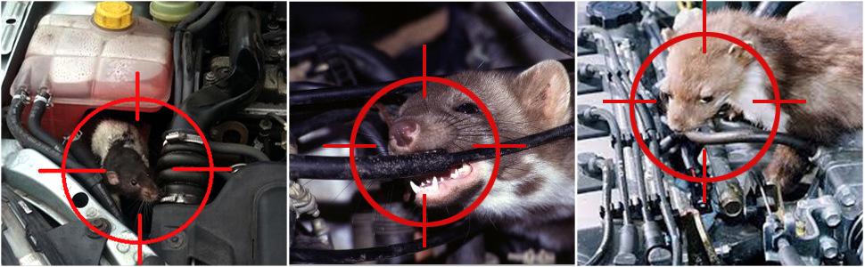 Завелась мышь в машине как избавиться | хитрости жизни