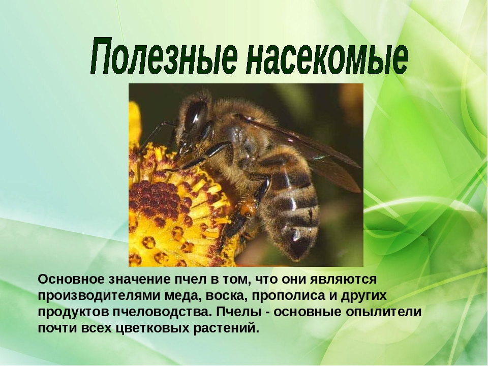 Пчела — официальная minecraft wiki