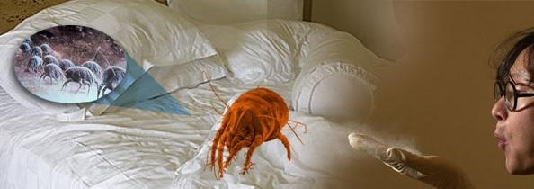 Как избавиться от клещей в подушках?