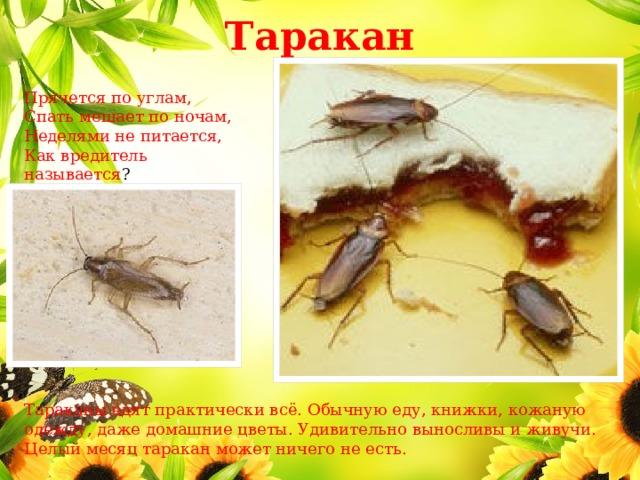 Кто ест тараканов, какие животные