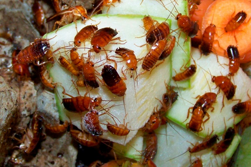 Кто ест клопов - естественные враги паразитов | medeponim.ru