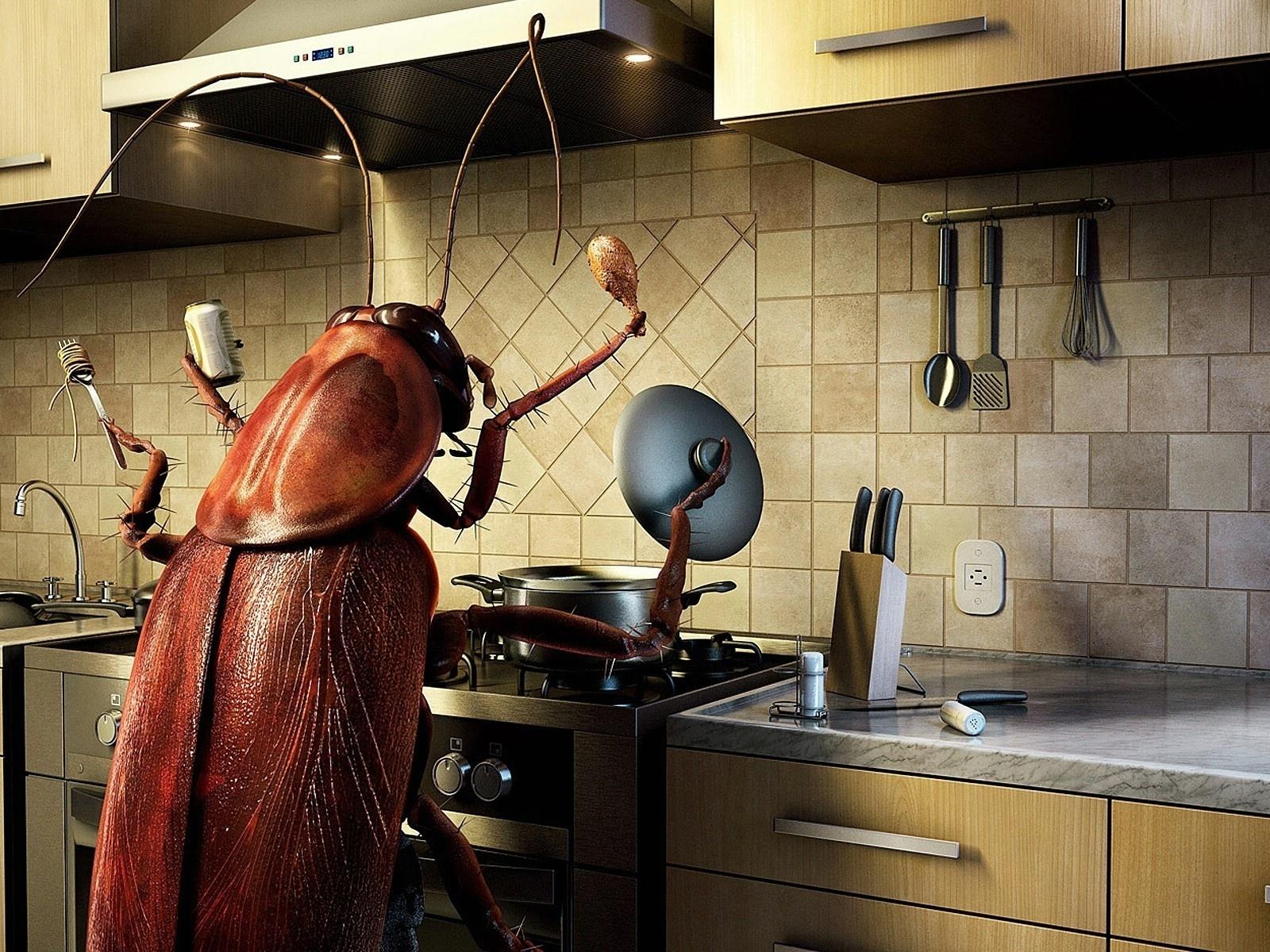 Тараканы: чем питаются, особенности ротового аппарата, что едят в квартире и сколько живут без еды русский фермер