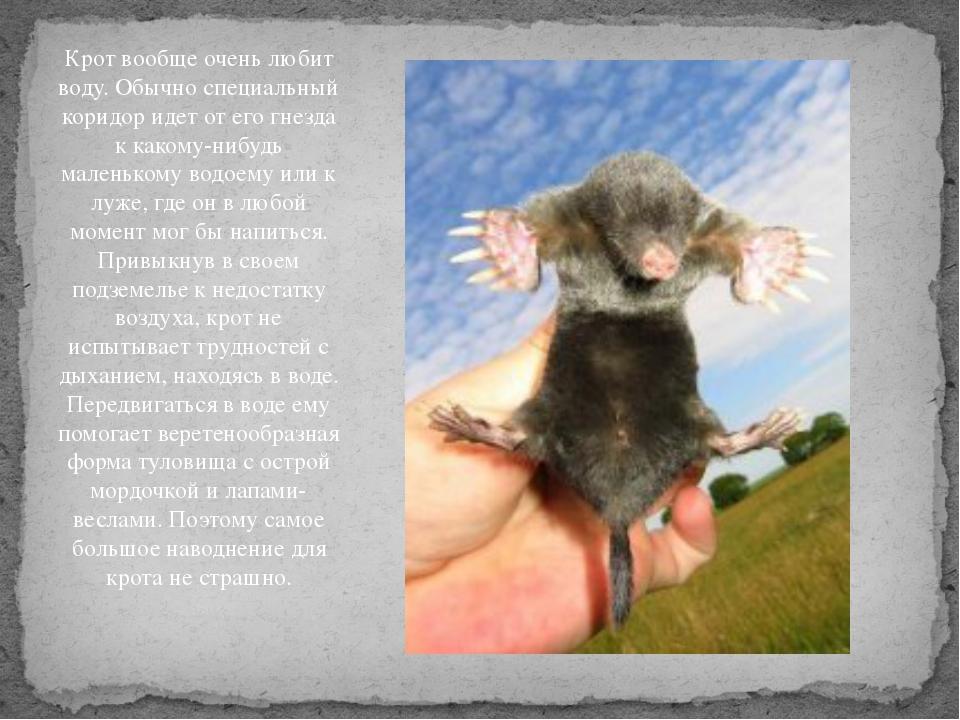 Слепыш животное. описание, особенности, виды, образ жизни и среда обитания слепыша