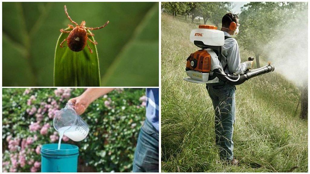 Как избавиться от комаров на дачном участке при помощи инсектицидов, народных и подручных средств