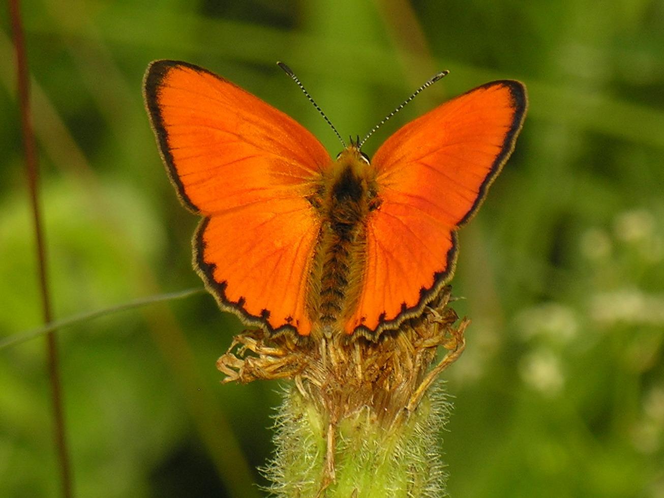 Бабочка - виды и описание бабочек в россии и мире | фото с названиями