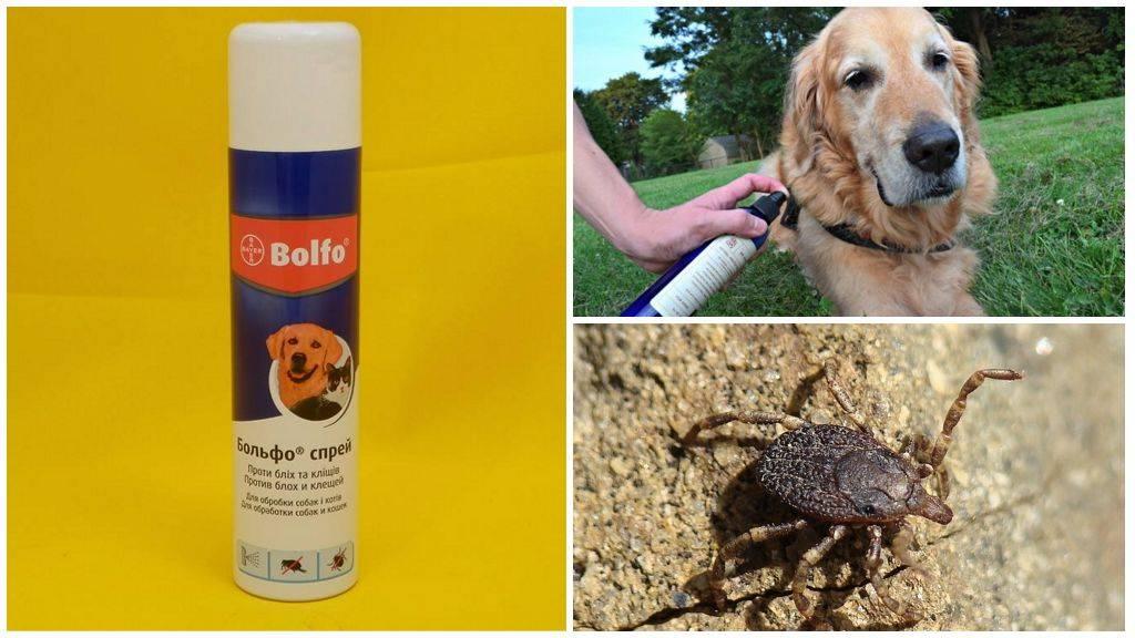 Как защитить собаку от клещей: капли, ошейник, шампуни, спрей, таблетки или прививка