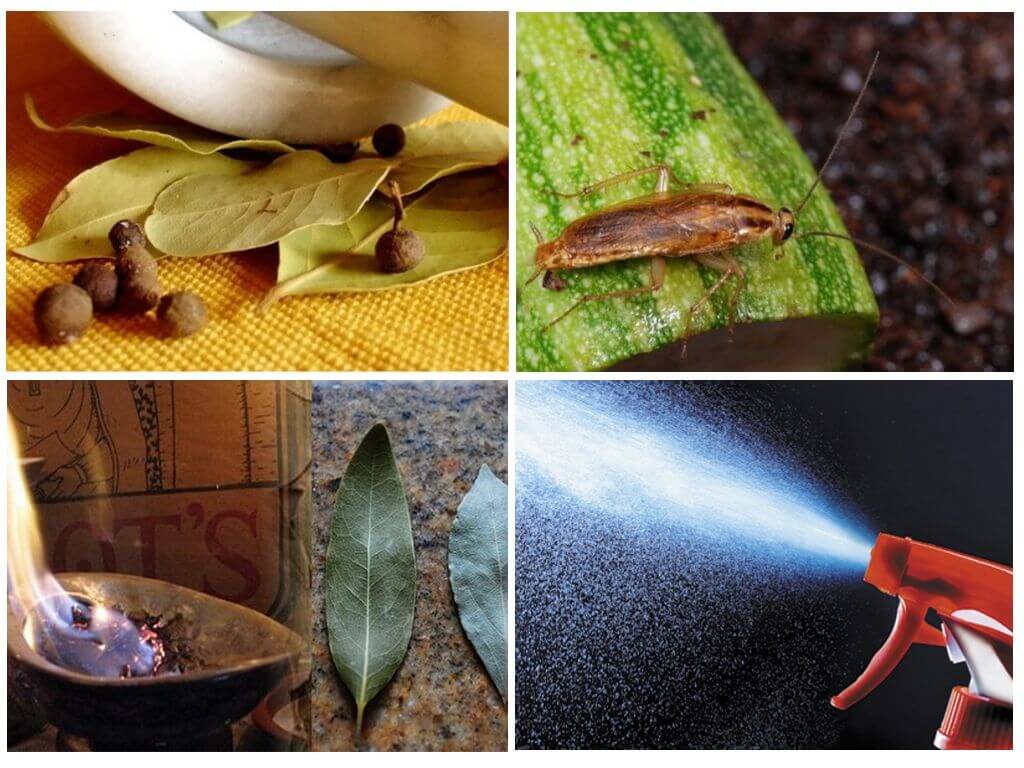 Как применять лавровый лист от тараканов?