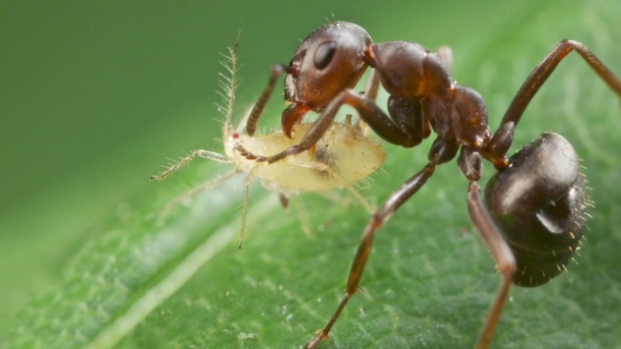 К чему в доме появляются муравьи – приметы