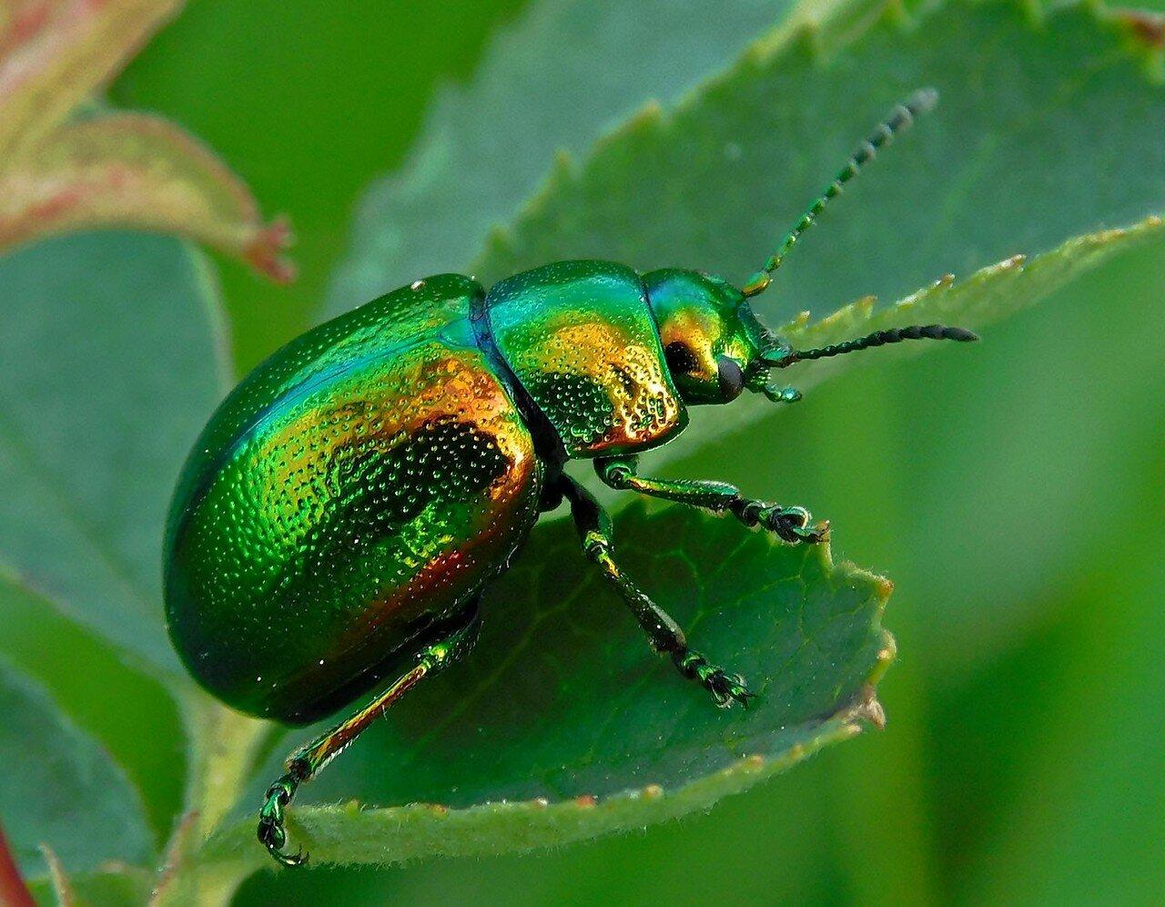 Странные, причудливые и интересные насекомые мира