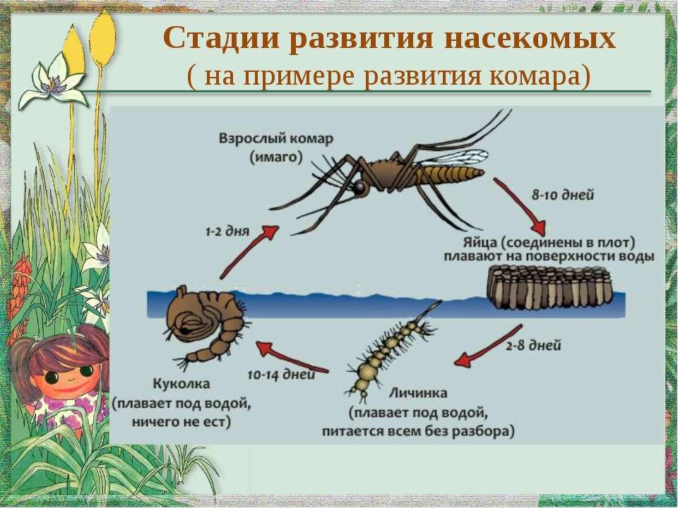 Моль: фото и описание насекомого, что ест, как размножается, как выглядит гусеница и взрослая бабочка, наносимый вред русский фермер