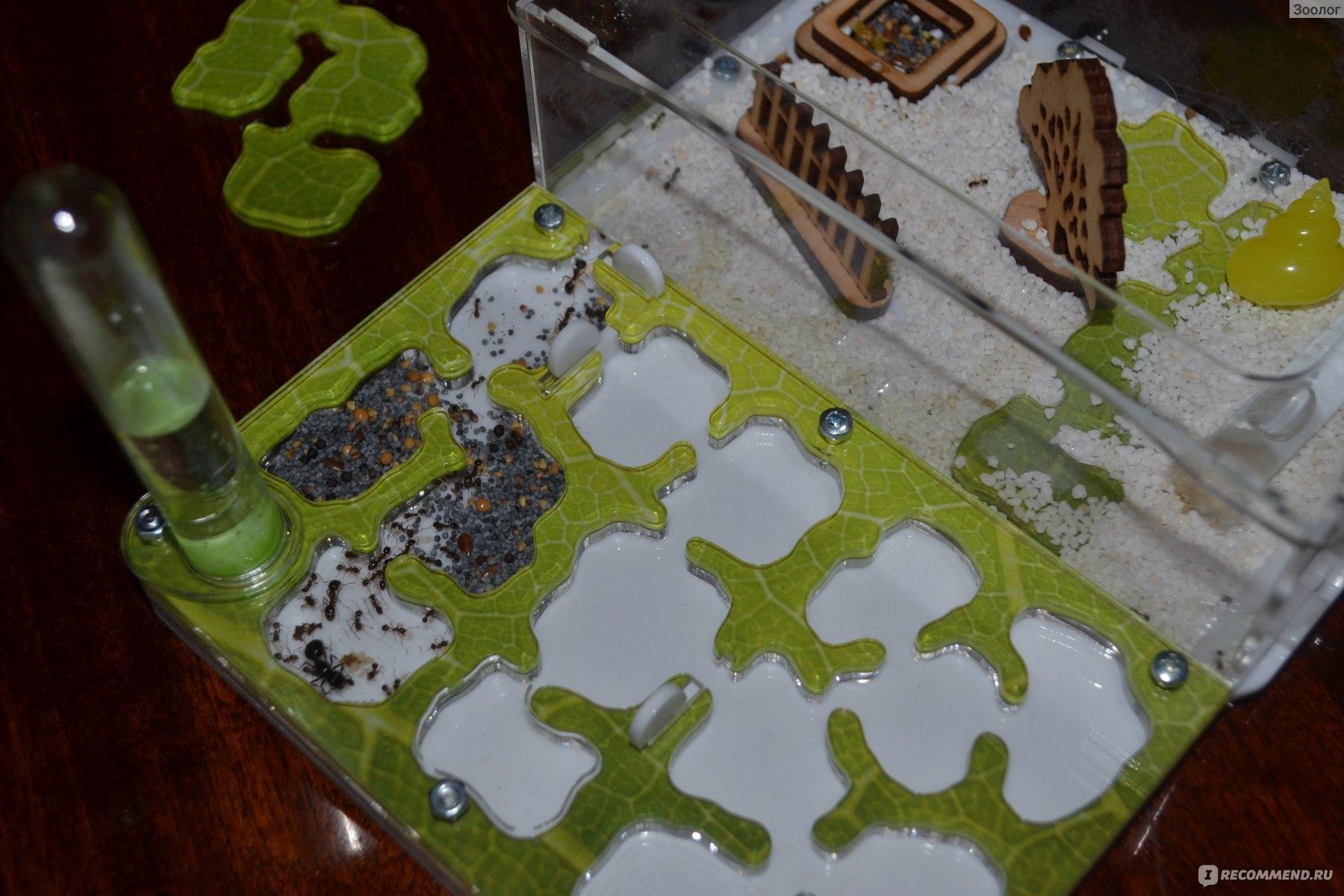 Муравьиная ферма с муравьями. как сделать муравьиную ферму своими руками?