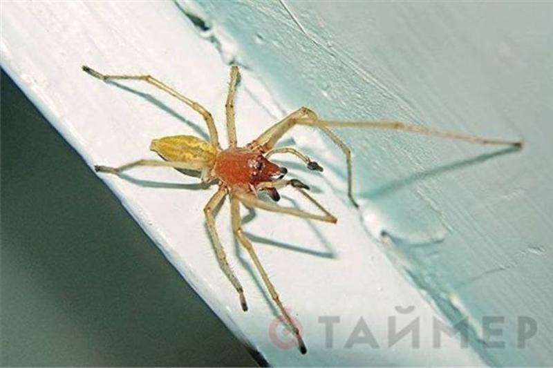Укус паука: симптомы, первая помощь, лечение, осложнения