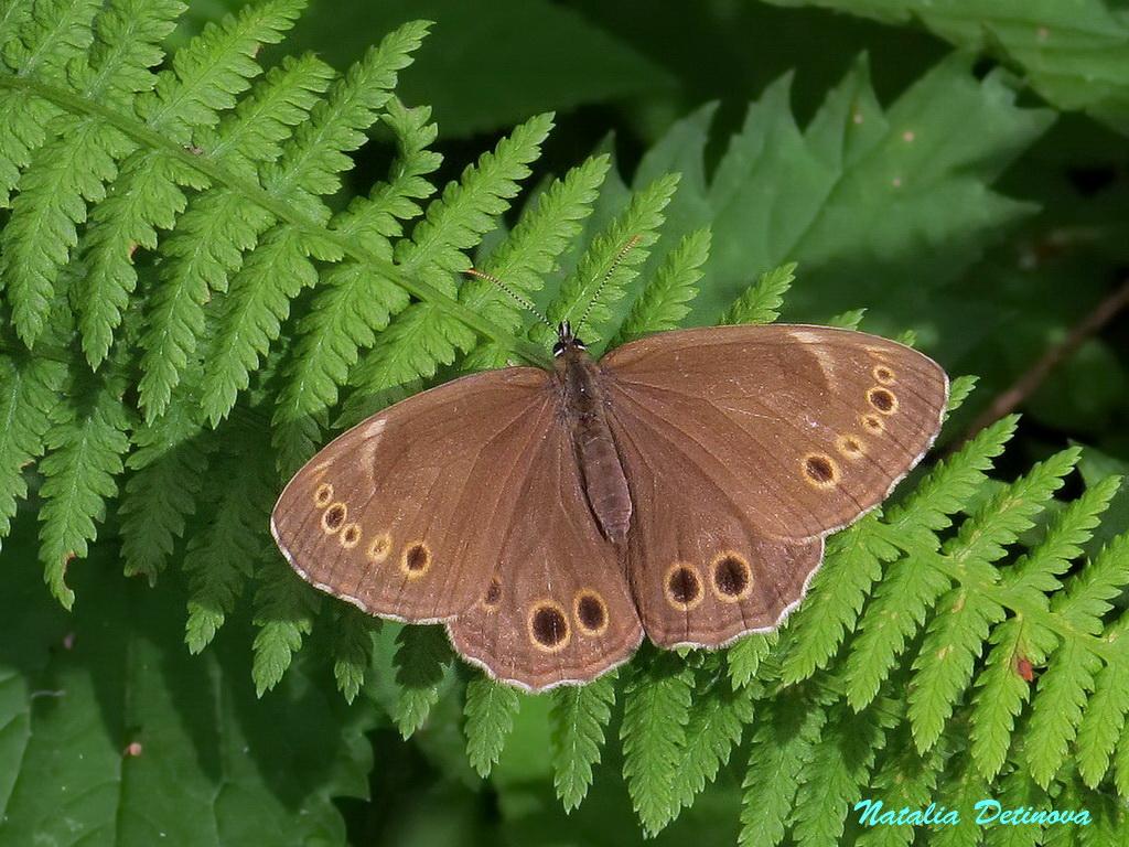 Бабочки (выпуск 6)
