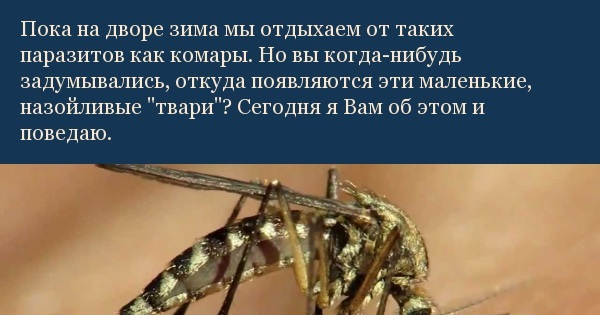 Откуда берутся комары в квартире и на природе - gkd.ru
