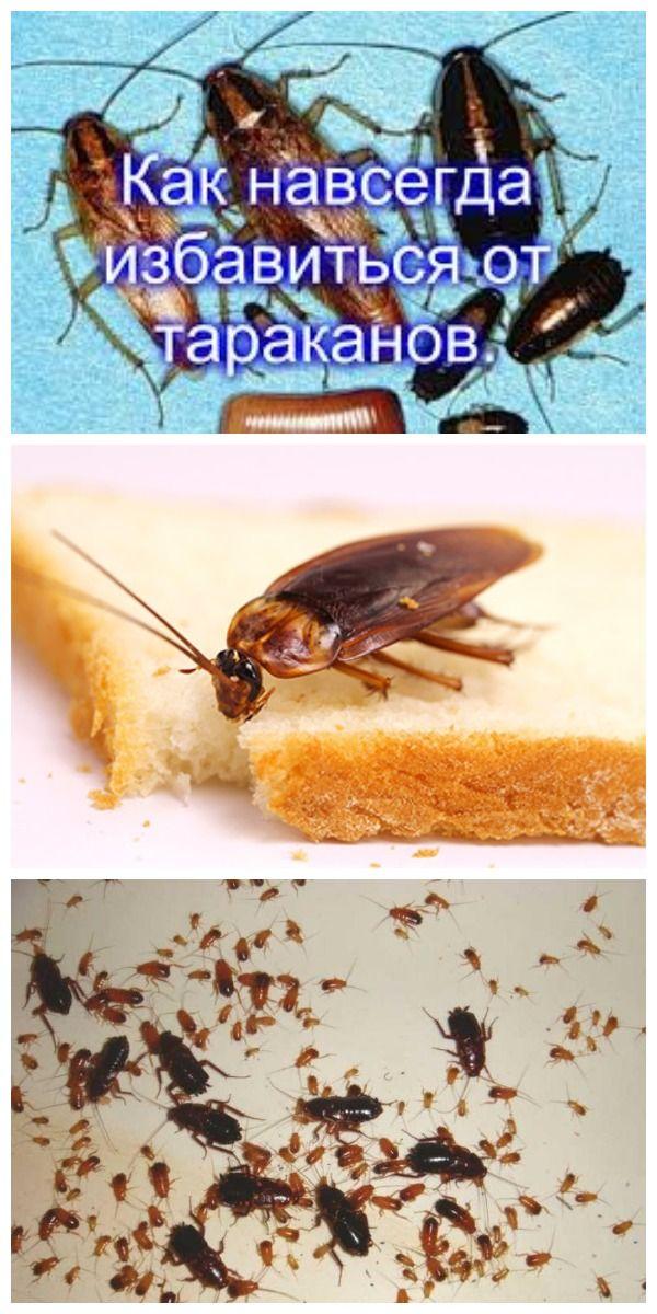 Как вывести тараканов из квартиры навсегда и быстро?