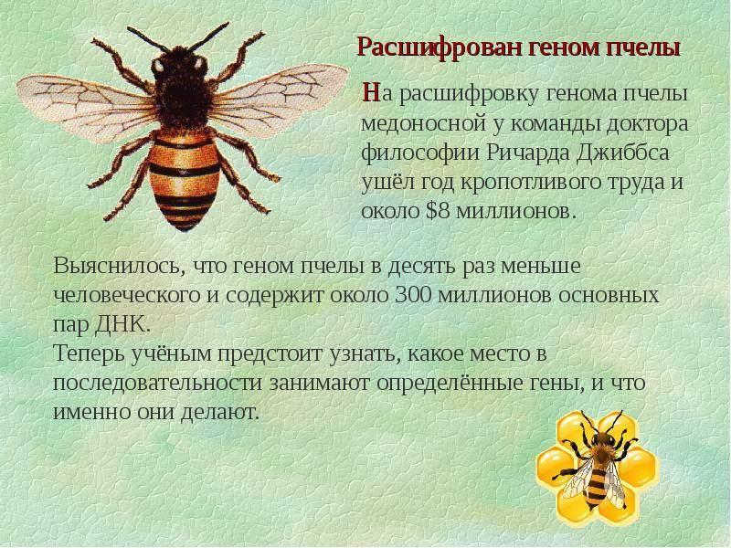 Интересные факты о пчелах, о которых мало кто знает