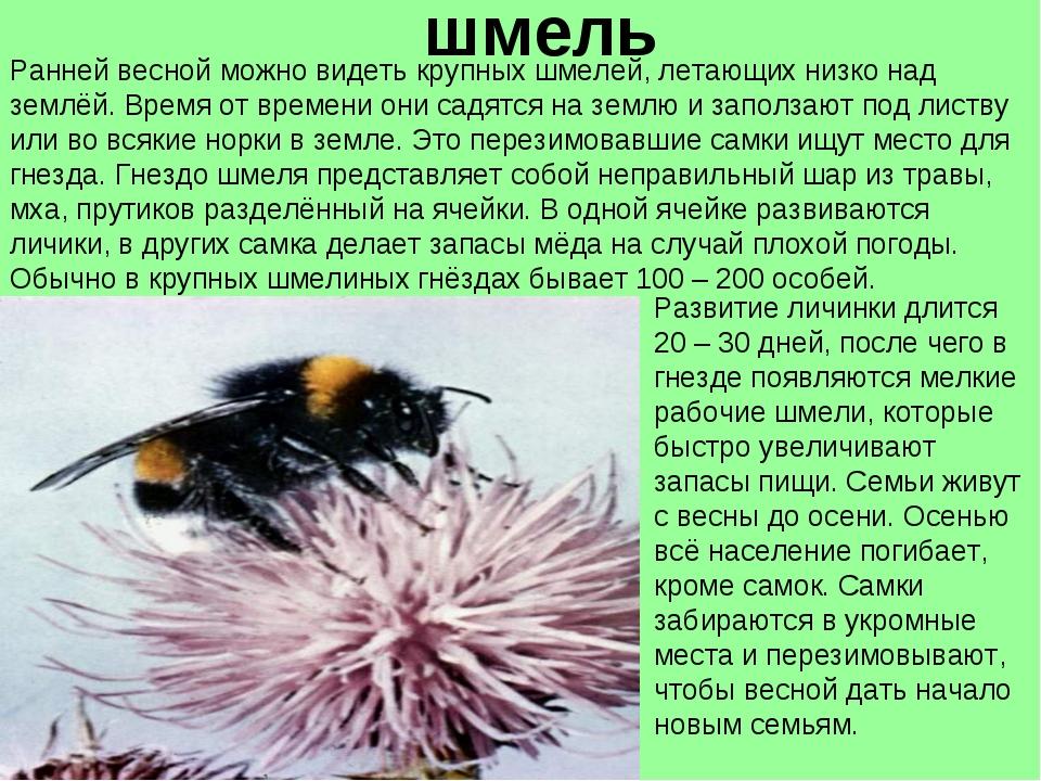 10 объяснений самых популярных примет и суеверий • всезнаешь.ру