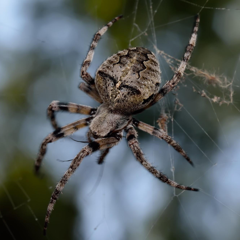 Рейтинг опасных пауков, обитающих в росcии   интересное рядом   яндекс дзен