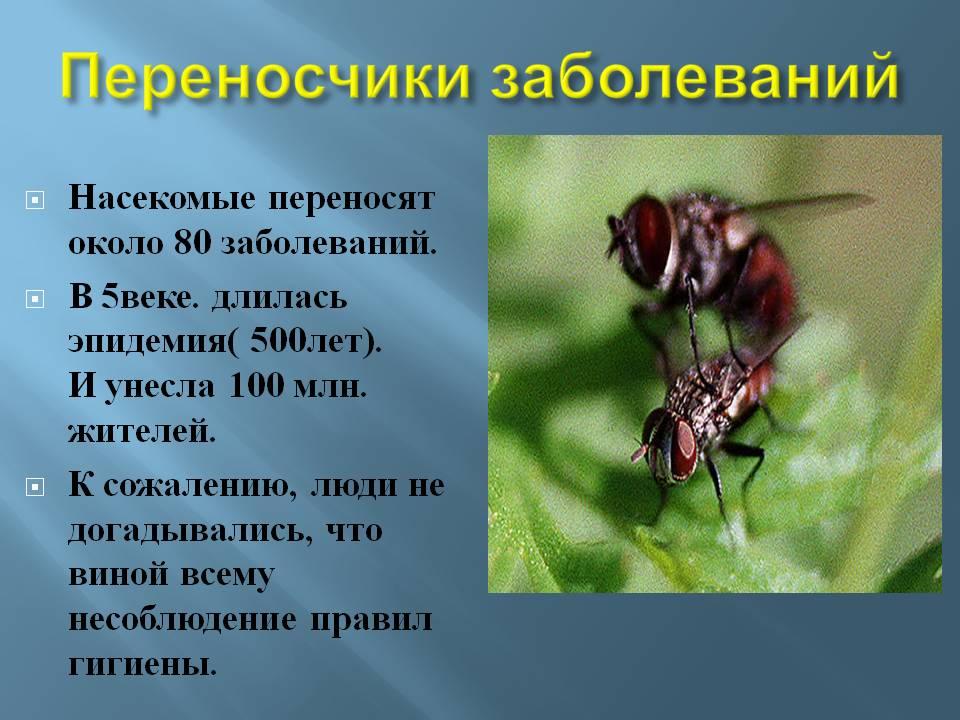 Какой вред могут нанести тараканы