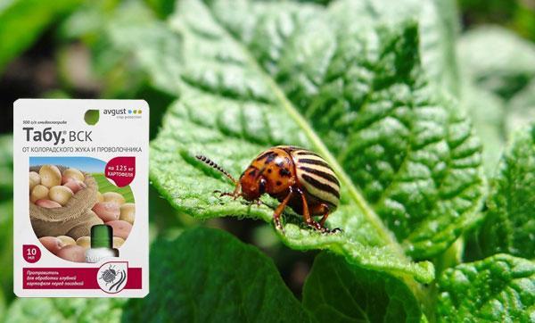 Инсектицид табу от колорадского жука: инструкция по применению