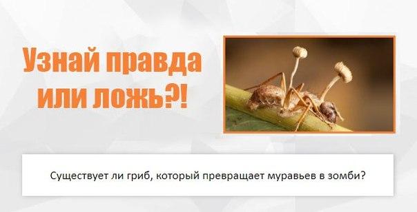 Кордицепс однобокий (ophiocordyceps unilateralis): морфология, жизненный цикл, лекарственный потенциал