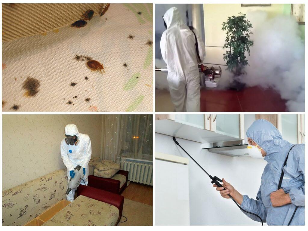 Как избавиться от клещей в квартире: обработка помещений, мебели и вещей