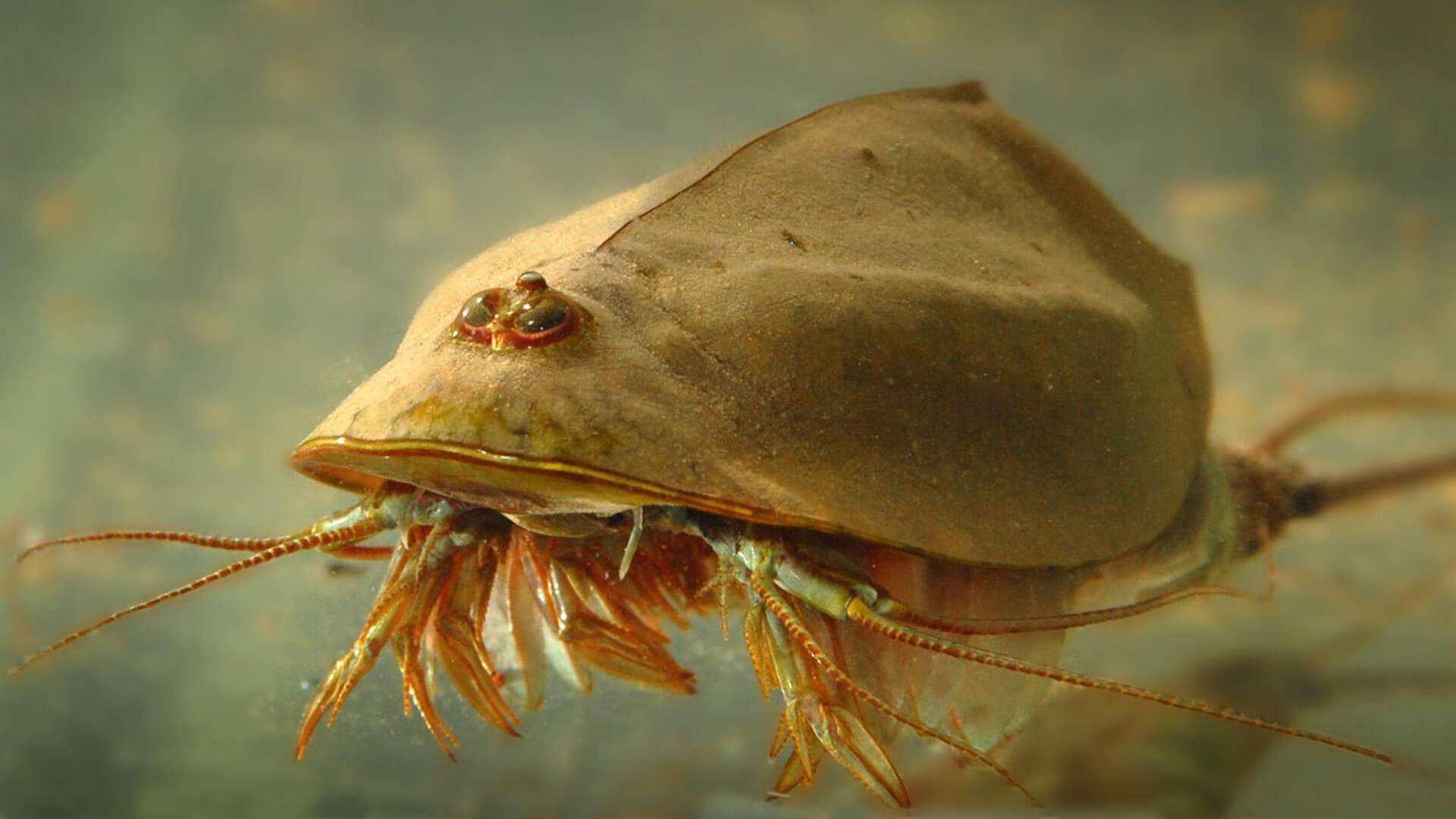 Болбитис генделота содержание размножение освещение фото. | аквариумные рыбки