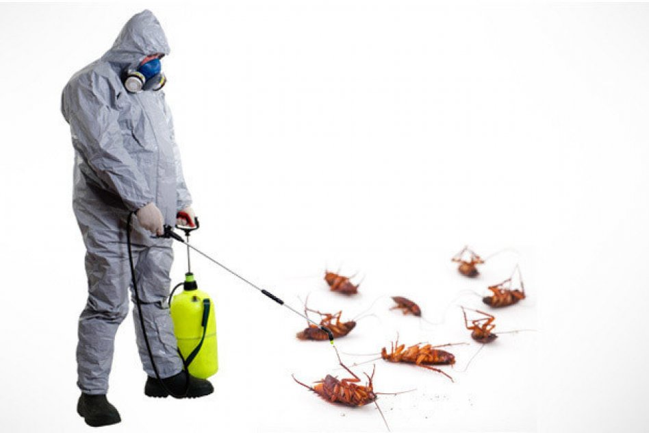 Дезинфекция от тараканов: профессиональная обработки квартиры от насекомых