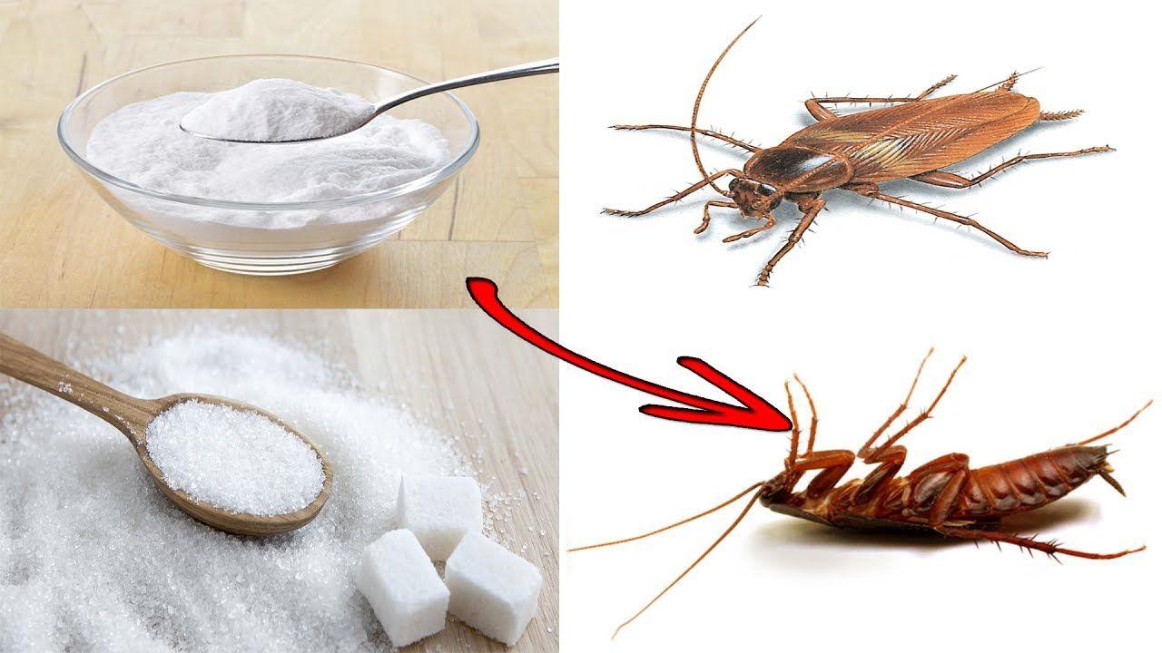 Как вывести тараканов из квартиры быстро и навсегда