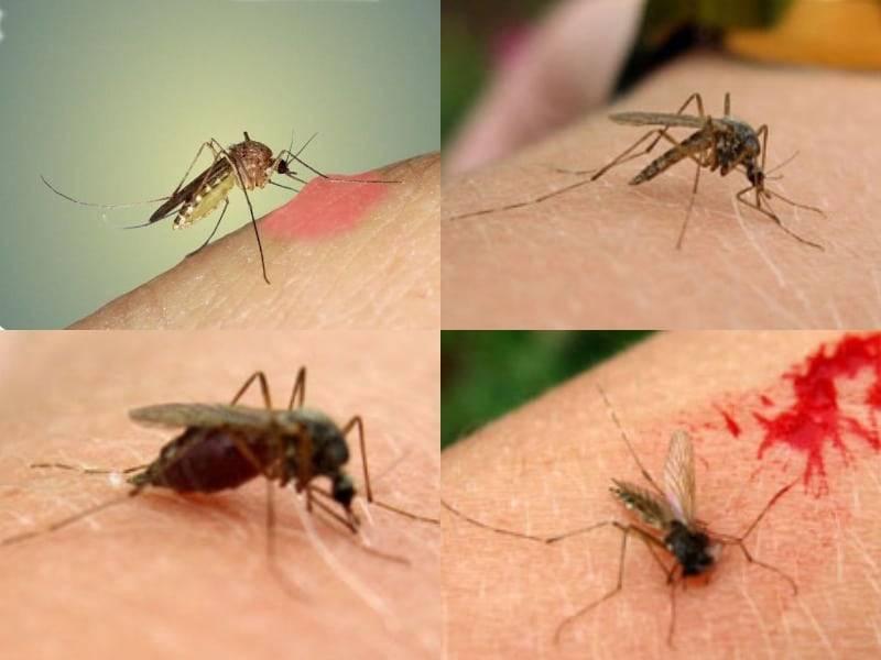 Откуда берутся комары