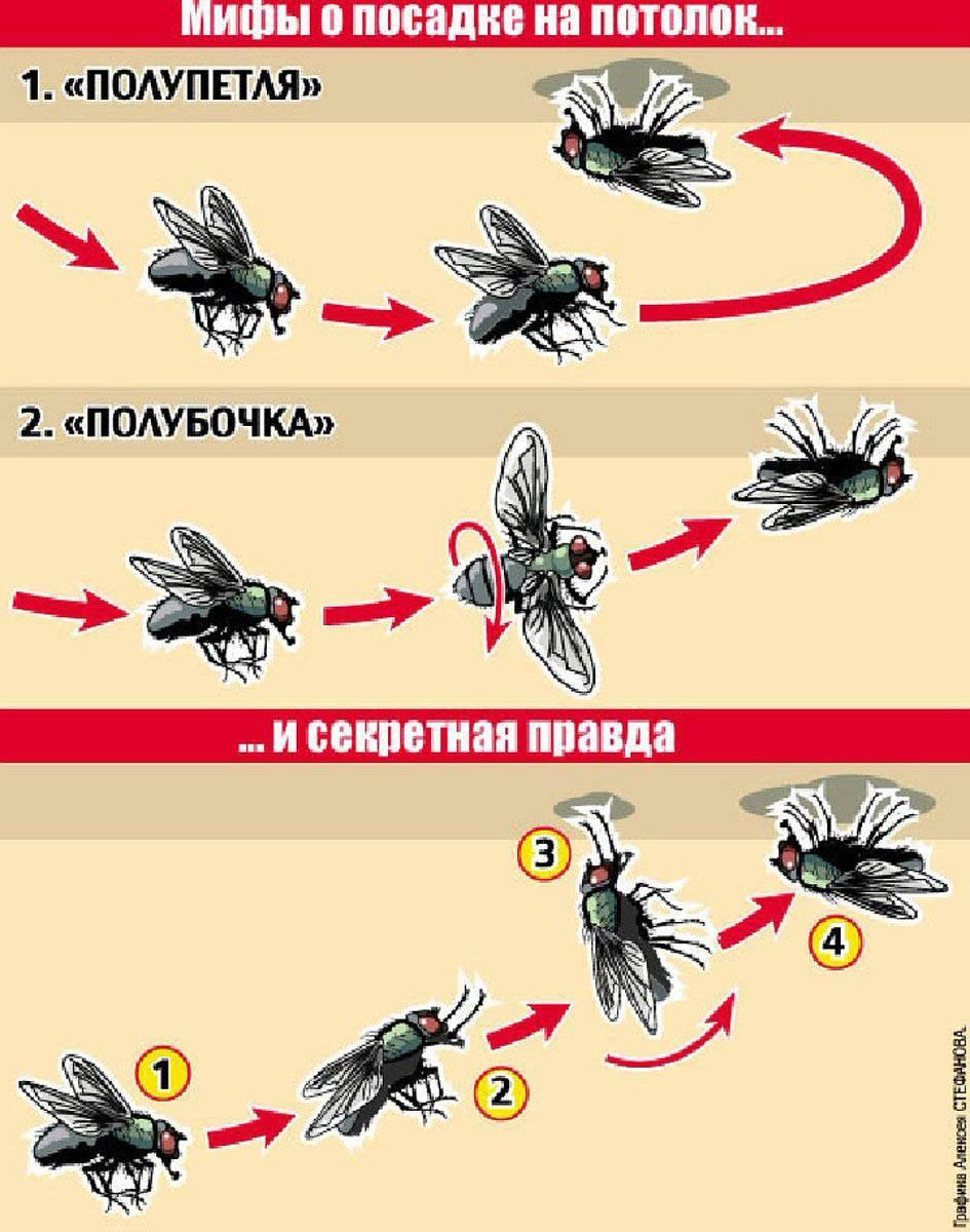 Почему пауки не падают с потолка. как муха садится и держится на потолок