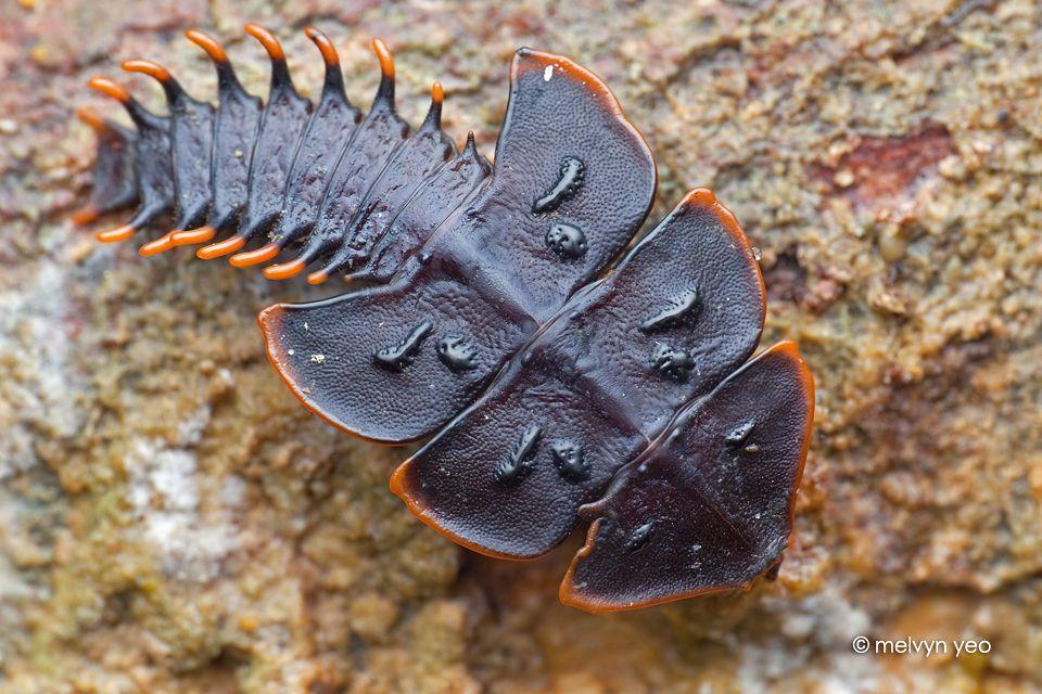 15 самых жутких доисторических существ, которых удалось обнаружить (16 фото)