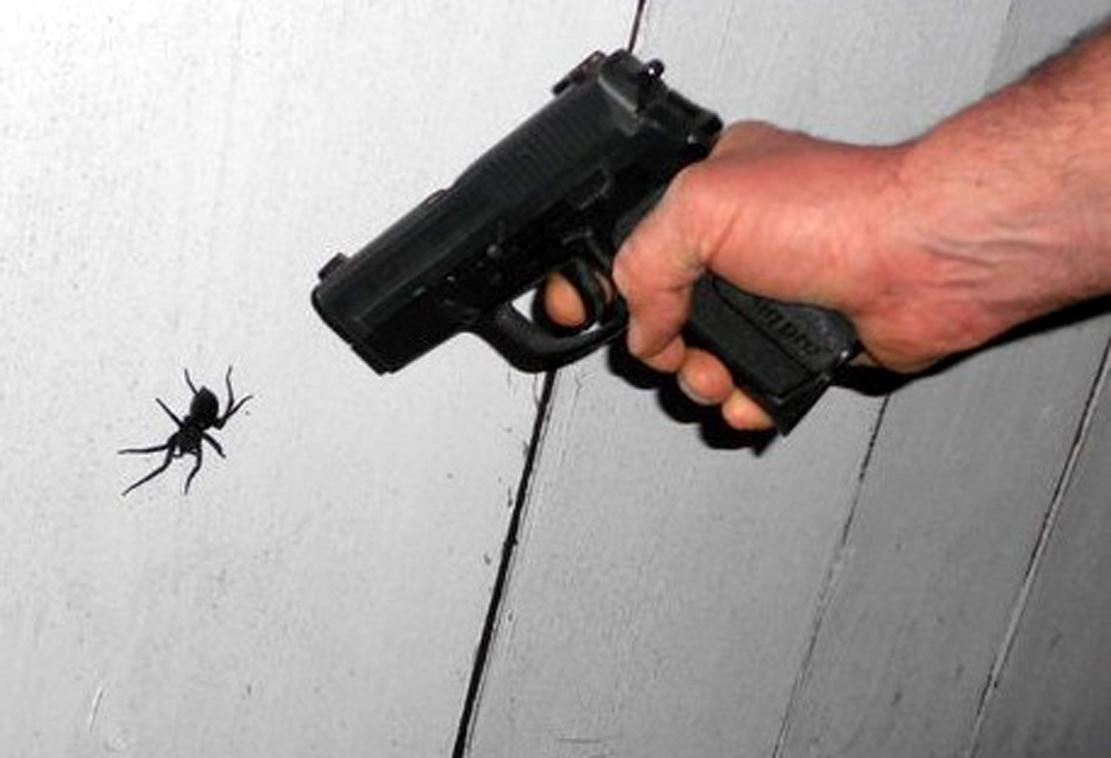 Как вывести пауков из дома: способы избавления от пауков в частном доме и в квартире