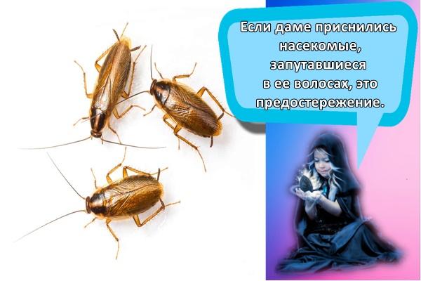 К чему снится  таракан во сне — по 90 сонникам! если видишь во сне таракан что значит?