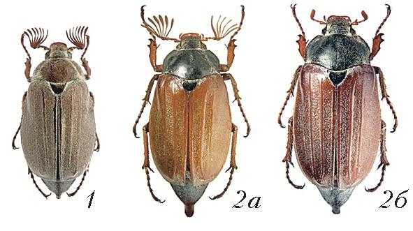 Класс насекомые: представители, харатеристика, строение