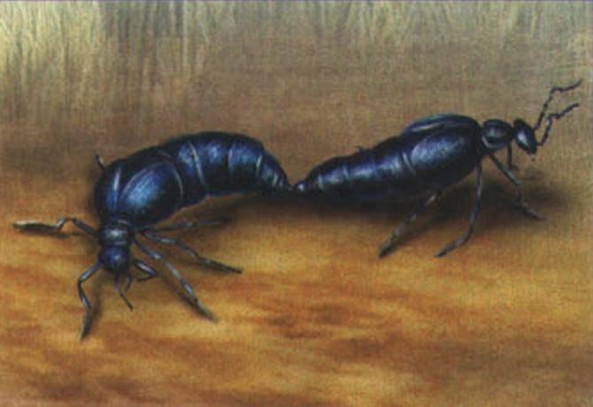 Жужелицы (carabidae): жизненные формы имаго - очерк и.х.шаровой