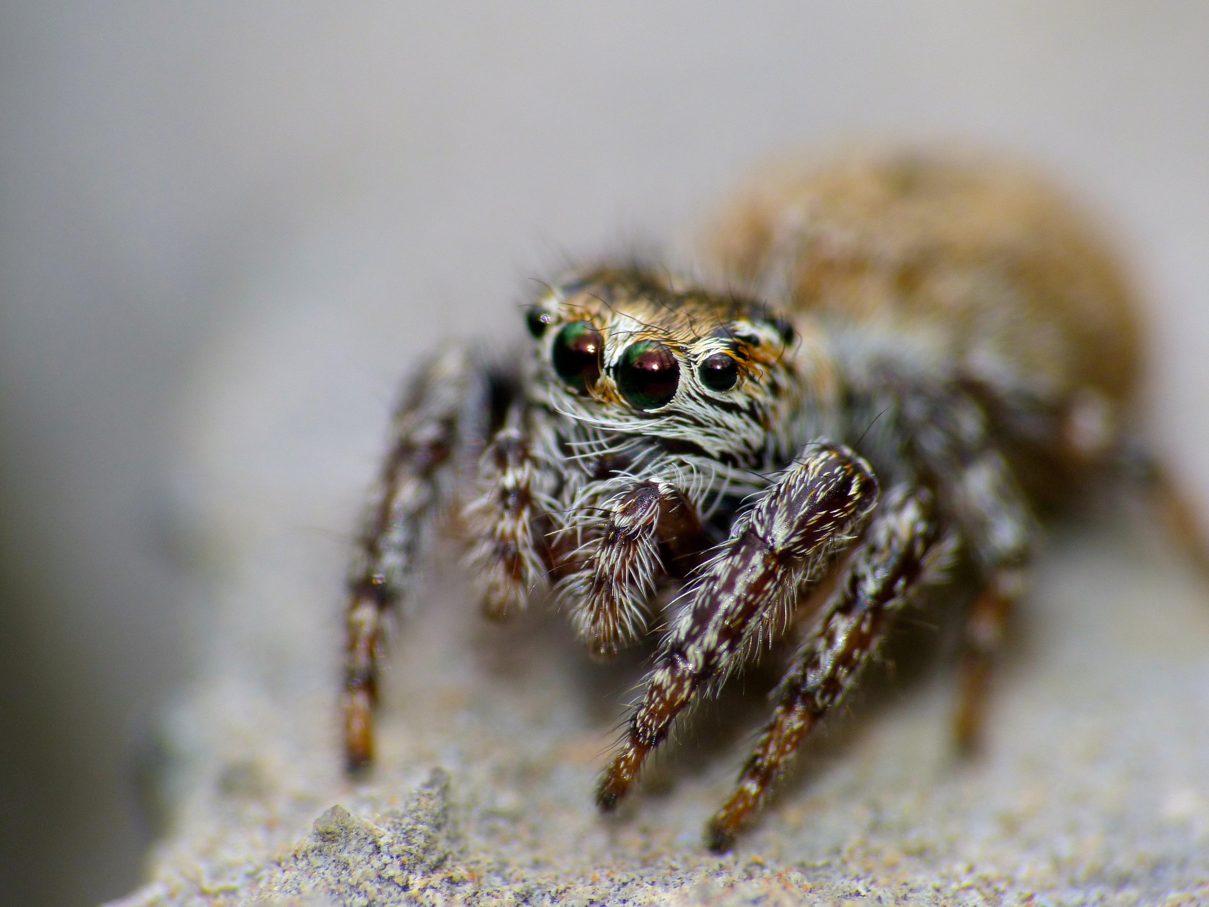 Виды пауков с названиями и описанием +фото, опасность для человека