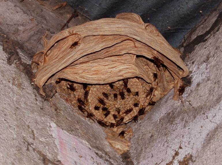 Как избавиться от гнезда шмеля на даче, меры безопасности