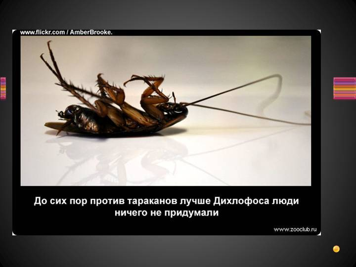 Лесные тараканы фото   что говорят насекомые