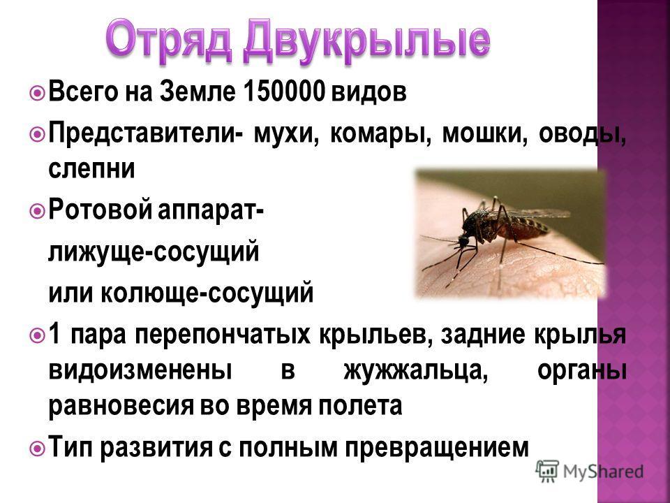 Овод насекомое. описание, особенности, виды, образ жизни и среда обитания овода