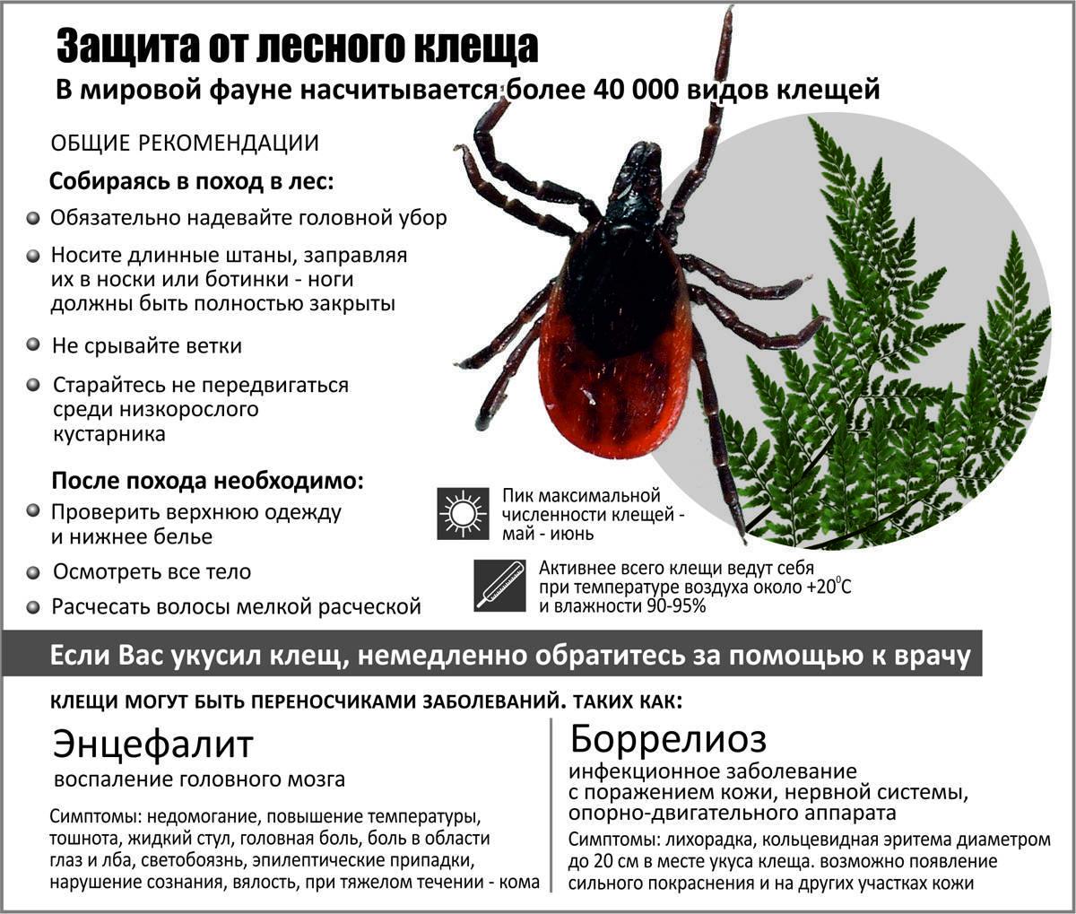 Клещи: виды, особенности, образ жизни и опасность для человека