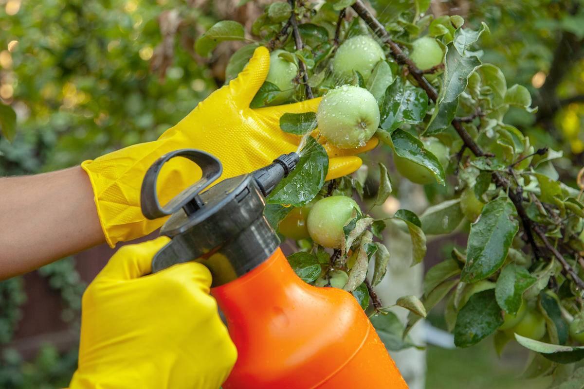 Как избавиться от тли на садовом участке: народными и современными средствами