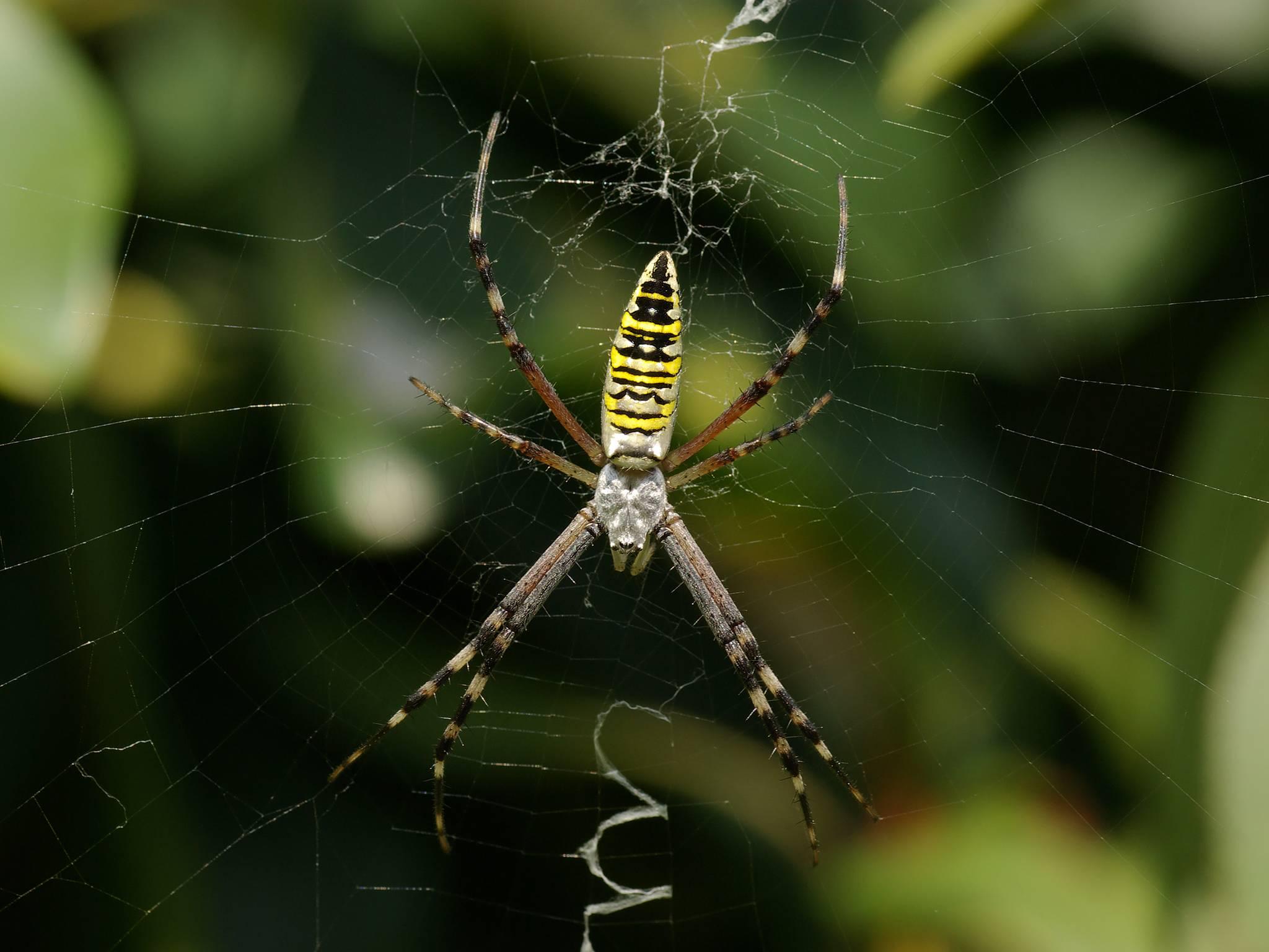 Породы пауков, с которыми вы можете встретиться завтра