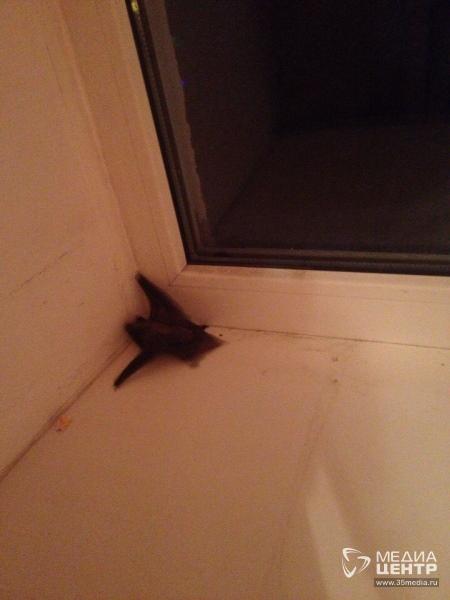 Что делать, если в ваш дом залетела летучая мышь?