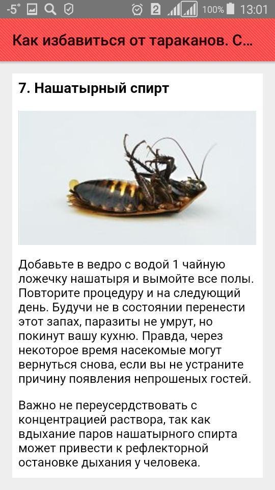 Лучший способ, как вывести тараканов из дома навсегда