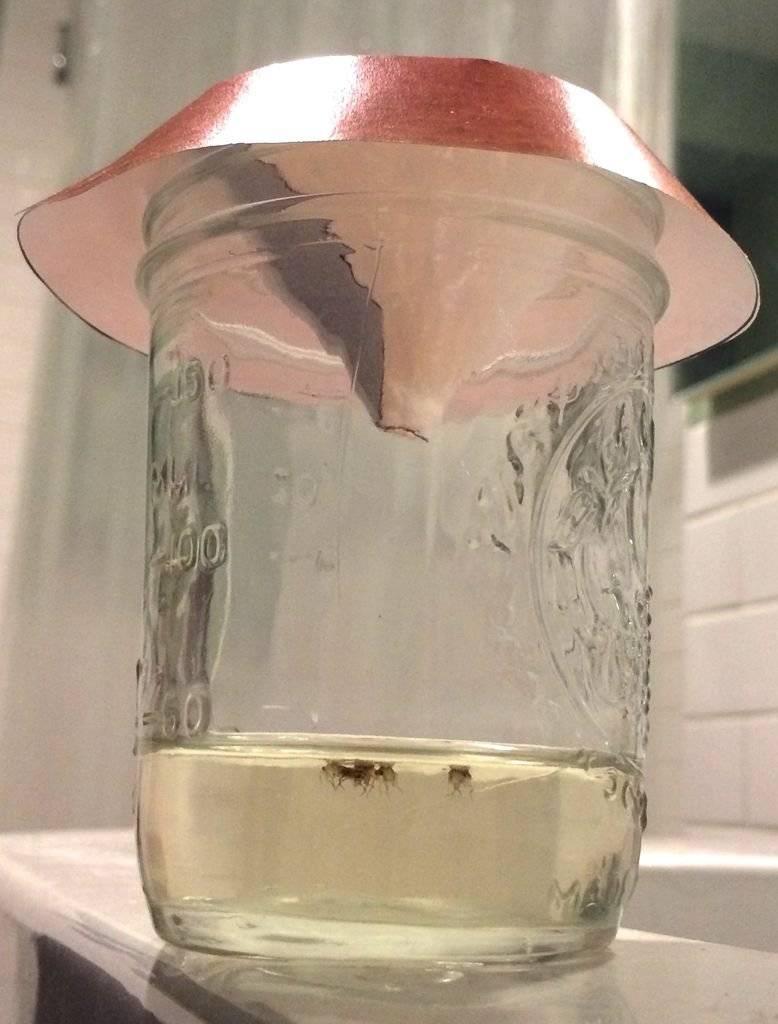 Как сделать ловушку для мух своими руками. как самостоятельно сделать липучку для мух