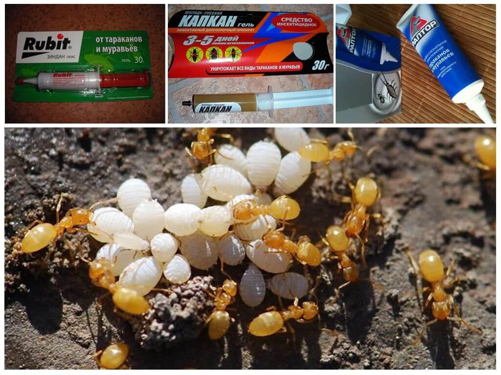 Профессиональные средства от муравьёв