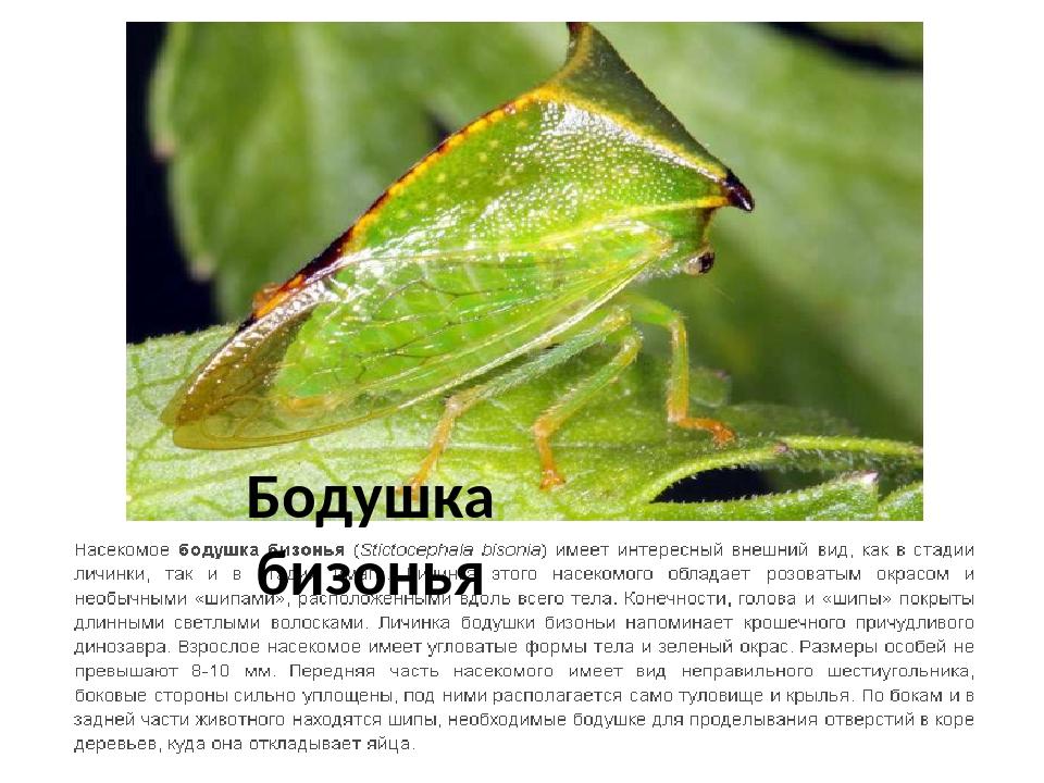 Меры борьбы с цикадкой